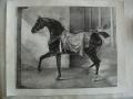 2 sur 2, Lithographie de Villain d'après un dessin de Géricault après restauration.JPG